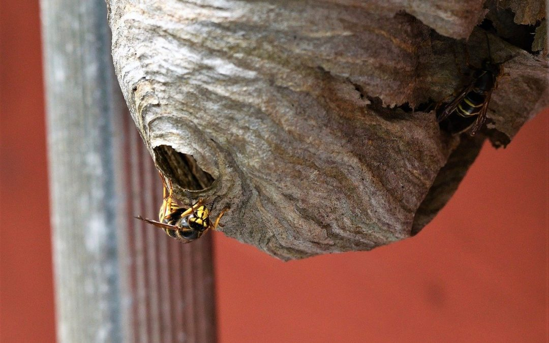 A Solution for a Wasp Infestation
